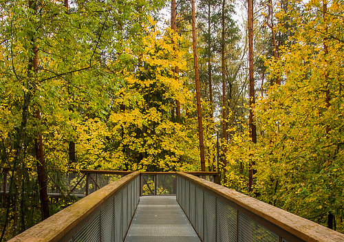 Treetop Walking Path, Anyksciai
