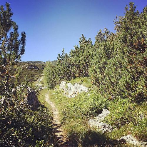 Il cielo azzurro che più azzurro non si può, il profumo dei mughi bruciati dal sole, un sentiero sotto i piedi ogni giorno... ecco il miglior riassunto di questa Buona Vacanza. #sun #mountains #holiday #asiago #mughi #blue #sky
